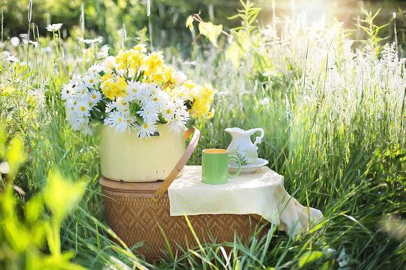 daisies-1466851_1280